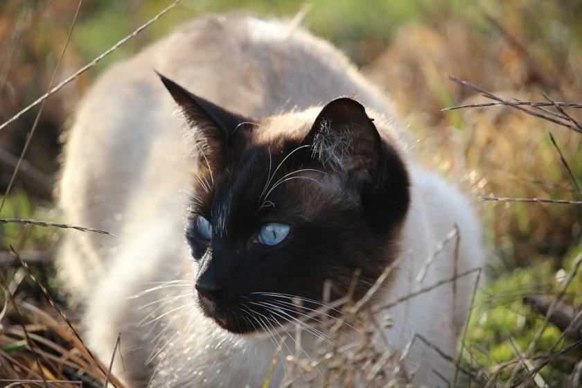 cat-1184955_960_720