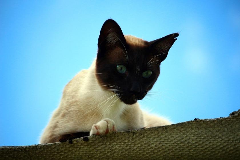 cat-1504307_960_720
