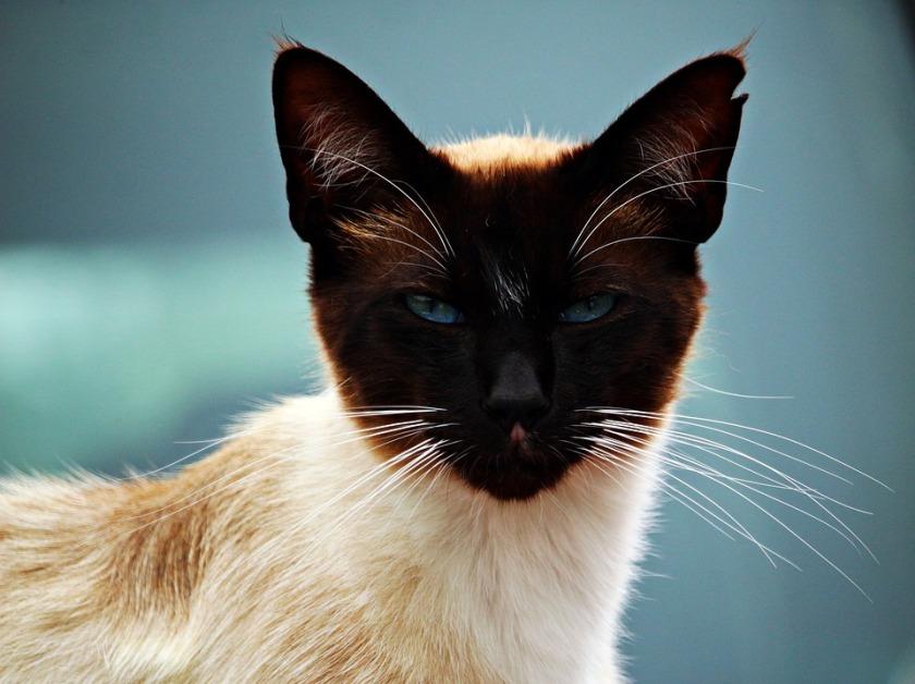 cat-1648719_960_720