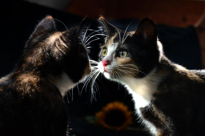 kitty mirror reflection